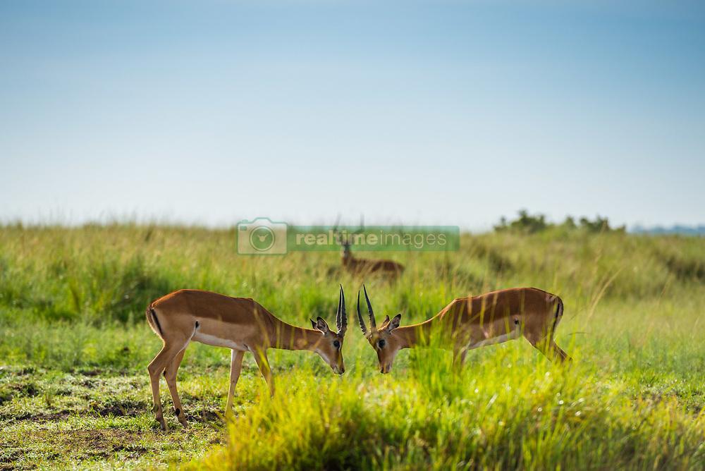 , Kenya - 3/21/2017 - (Photo by Shannon Wild/VWPics) *** Please Use Credit from Credit Field *** *** Please Use Credit from Credit Field ***