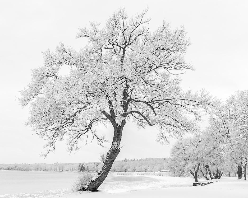 https://Duncan.co/tree-at-browns-bay-park-02