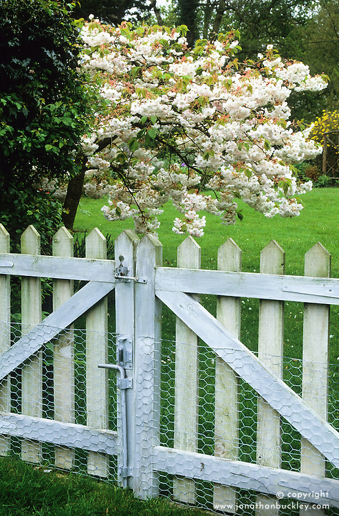 Wooden picket gate showing wire netting for protection from rabbits.