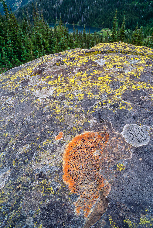 Boulder with lichens, Grand Lake in the distance, Olympic National Park, Washington, USA