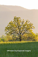 66745-04813 Sunrise in Cades Cove in spring Great Smoky Mountains National Park TN