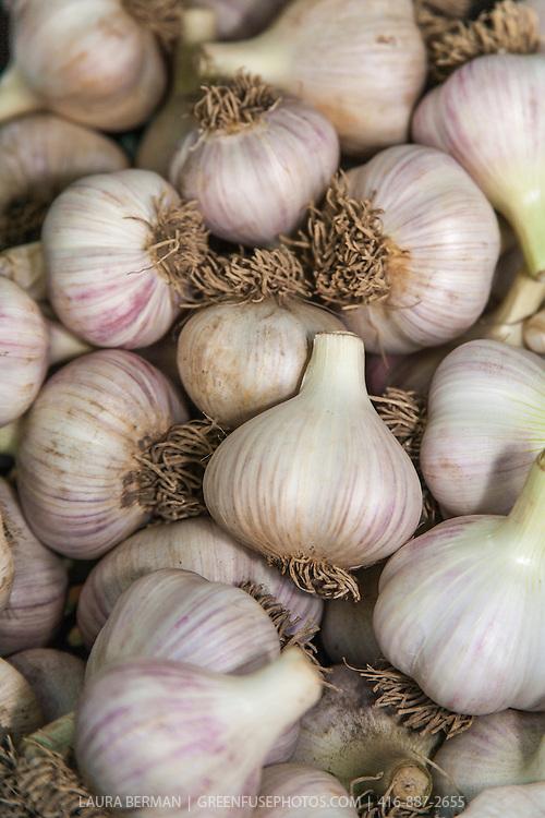 Large clean organically grown hardneck garlic bulbs.