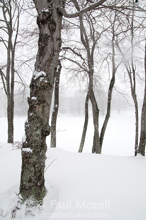 A small grove of trees beside one of the ponds at the Edgewater Office Park on Audubon Road, Wakefield, MA, during a heavy snow storm