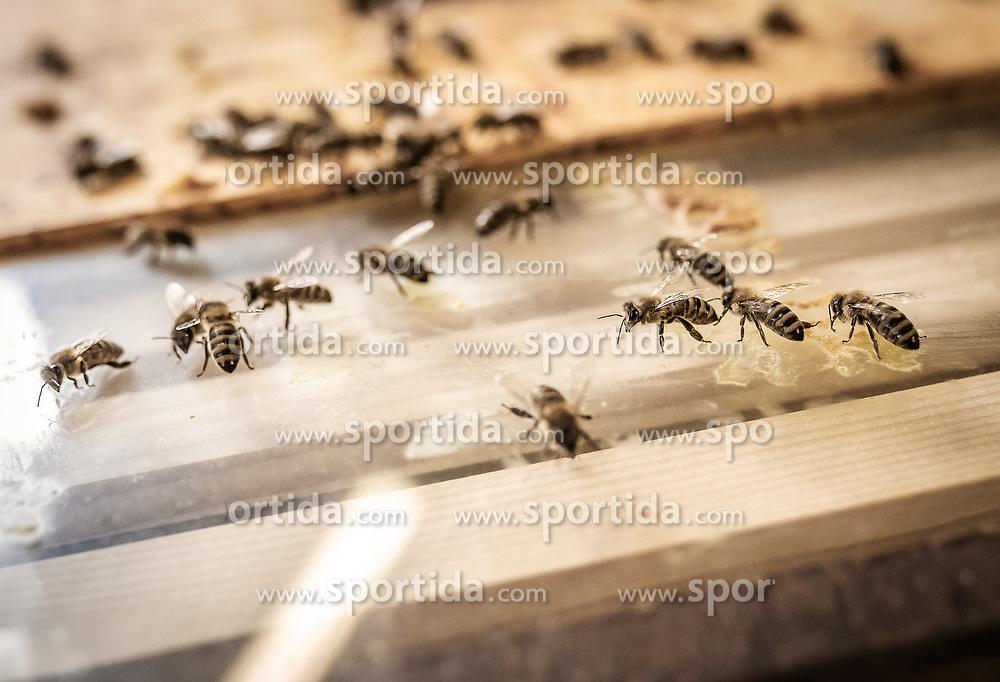 THEMENBILD - Bienen krabbeln auf einem Glasboden, aufgenommen am 12. Juni 2019, Piesendorf, Österreich // Bees crawling on a glass floor on 2019/06/12, Piesendorf, Austria. EXPA Pictures © 2019, PhotoCredit: EXPA/ Stefanie Oberhauser
