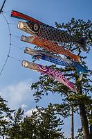 """Koinobori Childrens Day Carp Banners - Children's Day or """"Kodomo no hi"""" is a Japanese national holiday on May 5, the fifth day of the fifth month and is part of Golden Week. It is a day set aside to respect children's personalities and to celebrate their happiness. Originally it was called """"Boys Day"""" as the carp typically represent boys in Japan."""