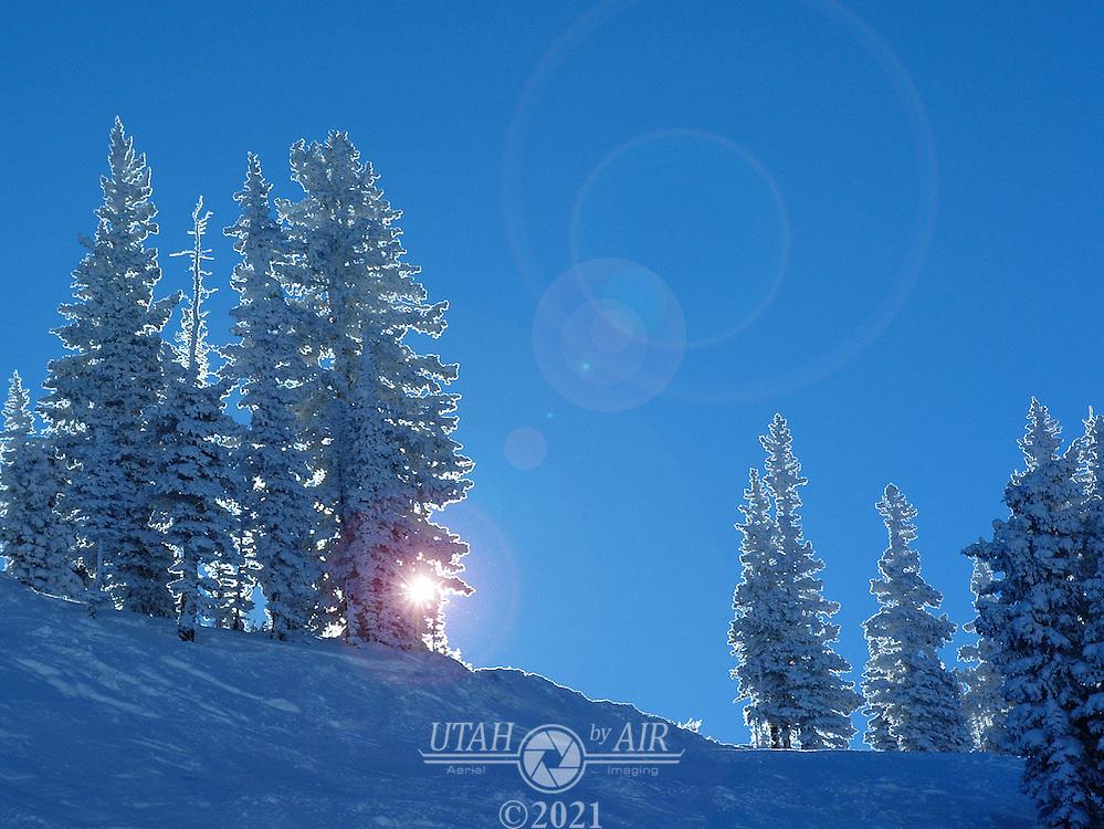 Snow covered pine trees at Alta, Utah