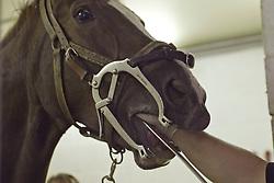Paardentandarts Dany Welter<br /> Stal Hollanders - Nijlen 2002<br /> Photo © Hippo Foto