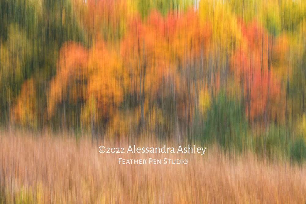 Long exposure tilt, autumn foliage and grasses captured from hiking trail at Gorman Nature Center.