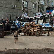 A dog stands outside the besieged police station in Slavyansk.