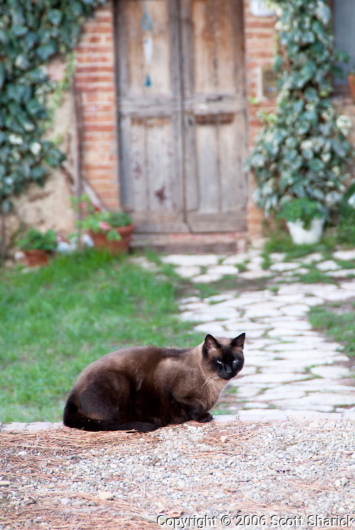A cat waits patiently for its owner in a small Italian town.