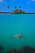 Sea Turtle Big Island Hawaii