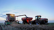 Custom harvester Justin Spielman from Newkirk, Oklahoma combines a field of canola near El Reno and offloads the grain into a waiting grain trailer