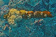 Assorted lichens on rock, Kenora, Ontario, Canada