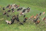 Cattle MMA<br /> Wetland MMA<br /> Abari Swamps<br /> Mahaica Miconi Abari<br /> GUYANA<br /> South America