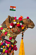 Camel with the indian flag at a dressing competition at the Desert Festival on 29th January 2018 in Jaisalmer, Rajasthan, India. It is an annual event that take place in February month in the beautiful city Jaisalmer. It is held in the Hindu month of Magh February, three days prior to the full moon.