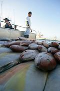 Fish Auction, Honolulu, Oahu, Hawaii