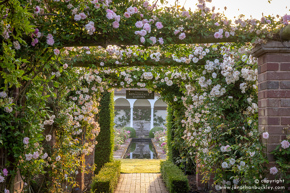 Entrance to The Renaissance Garden at dawn with Rosa 'Phyllis Bide' and 'Adélaïde d'Orléans'