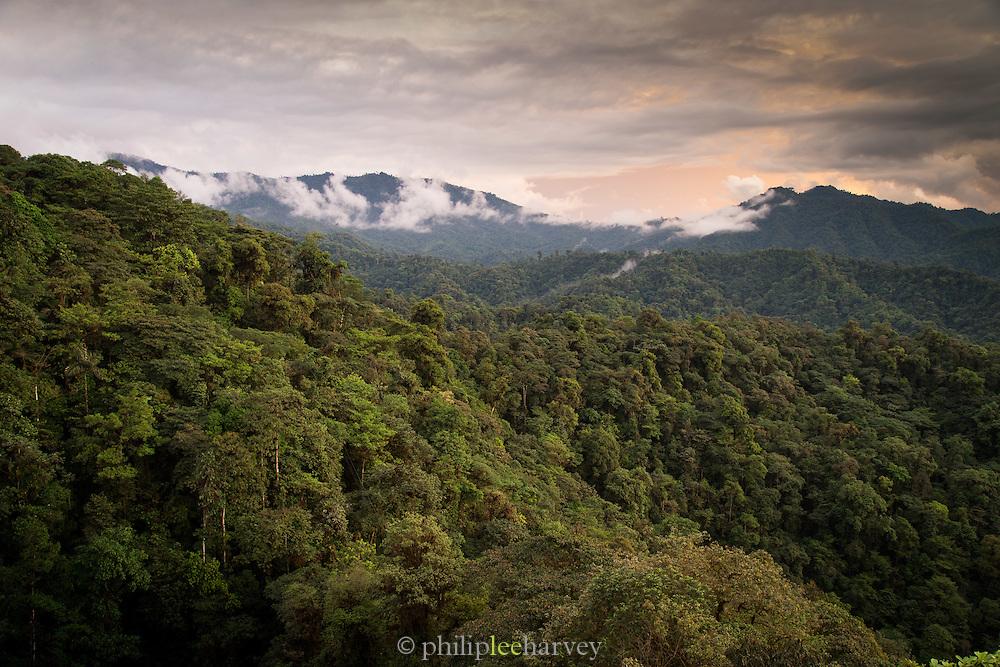 Cloud Forest, Mashpi Reserve, Distrito Metropolitano de Quito, Ecuador, South America