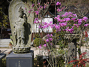 Japan, Honshu, Hiroshima 1000 Buddha Temple
