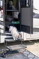 The Rare and Endangered Playa Cat! - https://Duncan.co/Burning-Man-2021