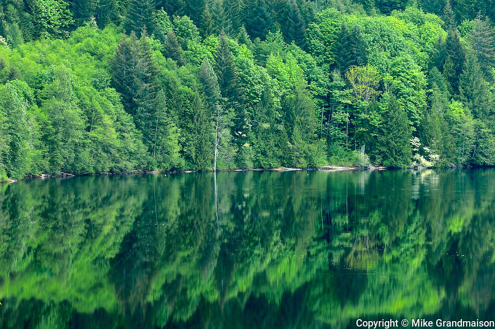 Forest reflected in Sproat Lake<br /> Vancouver Island<br /> British Columbia<br /> Canada