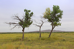trees in Basque del Apache Wildlife