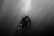 A diver coming up from a dive after lobsters