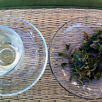 Asia, India, Darjeeling. Darjeeling Tea Tasting.