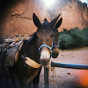 Arizona Outback Adventures, based in Scottsdale, AZ, leads a 4-day hiking trip of Havasupai Falls within the Grand Canyon National Park in Arizona. These photographs were shot on film using a Holga, a small plastic camera..