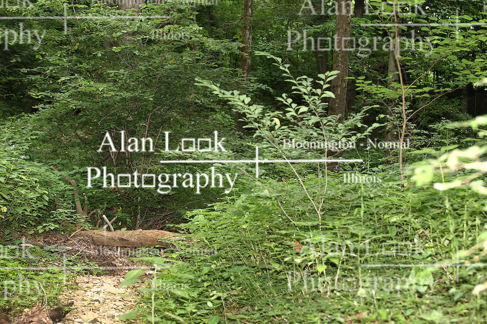 July 2007: scenic shot of dry creek bed,  Shot at the Trail of Tears State Park near Cape Girardeau, Missouri