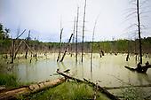 Vaughn Hills Conservation Area, Bolton, MA
