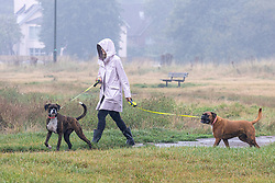 Licensed to London News Pictures. 14/09/2021. London, UK. A dog walker braves the rain on Wimbledon Common south-west London as weather forecasters issue yellow weather warnings for heavy rain and thunderstorms for London and the South East today with the potential of flooding to homes and businesses and disruption to travel networks. However, sunny warm weather is expected from tomorrow with highs of 24c. Photo credit: Alex Lentati/LNP
