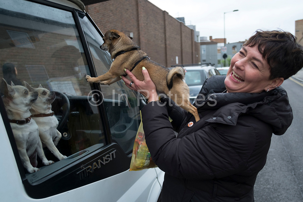 Two Chihuahua dogs looking out of the window of their owners van in Hackney are visited by a woman owner with here own in East London, England, United Kingdom. The Chihuahua is the smallest breed of dog and is named for the state of Chihuahua. Chihuahuas come in a wide variety of sizes, colors, and coat lengths.