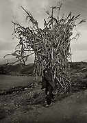 High Albania, near Valbona. Man carrying cut grasses for fuel.