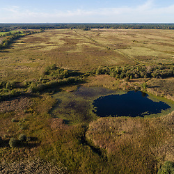 Drone view of grasslands and woods (cedar swamp) in Middleborough and Halifax, Massachusetts.