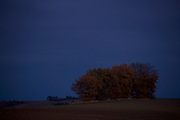 group of trees in a rural landscape at dusk