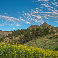 A photographer shoots wildflowers growing on  a butte in the Upper Missouri River Breaks of central Montana.  This is part of the PN Ranch, recently acquired by the American Praqirie Foundation.