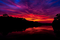 Fiery Khmer Sunrise: A dramatic and fiery sunrise over the jungle, the placid moat and ancient ruins of Angkor Wat, Siem Reap Cambodia.