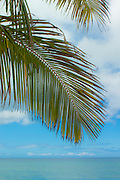 Palm frond against the sky in Hawaii
