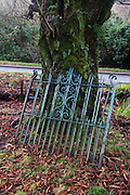 Iron gates belonging to Torosay North Lodge lean agsinst a Horse Chestnut tree at the former entrance to Torosay Castle (now in private hands), Craignure, Isle of Mull, Scotland.