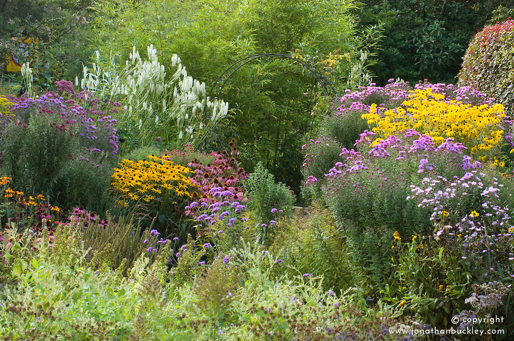 Autumn border at Old Court Nurseries, Colwall. Planting includes asters, rudbeckia and echinacea