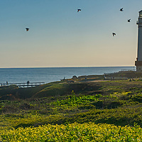 The Lighthouse at Pigeon Point State Park near Pescadero, California, once warned ships off of treacherous nearby reefs.