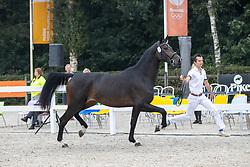 007, My Cocaco Girl<br /> Nationaal Kampioenschap KWPN<br /> 3 jarige springmerries<br /> © Hippo Foto - Dirk Caremans<br />  15/08/2020