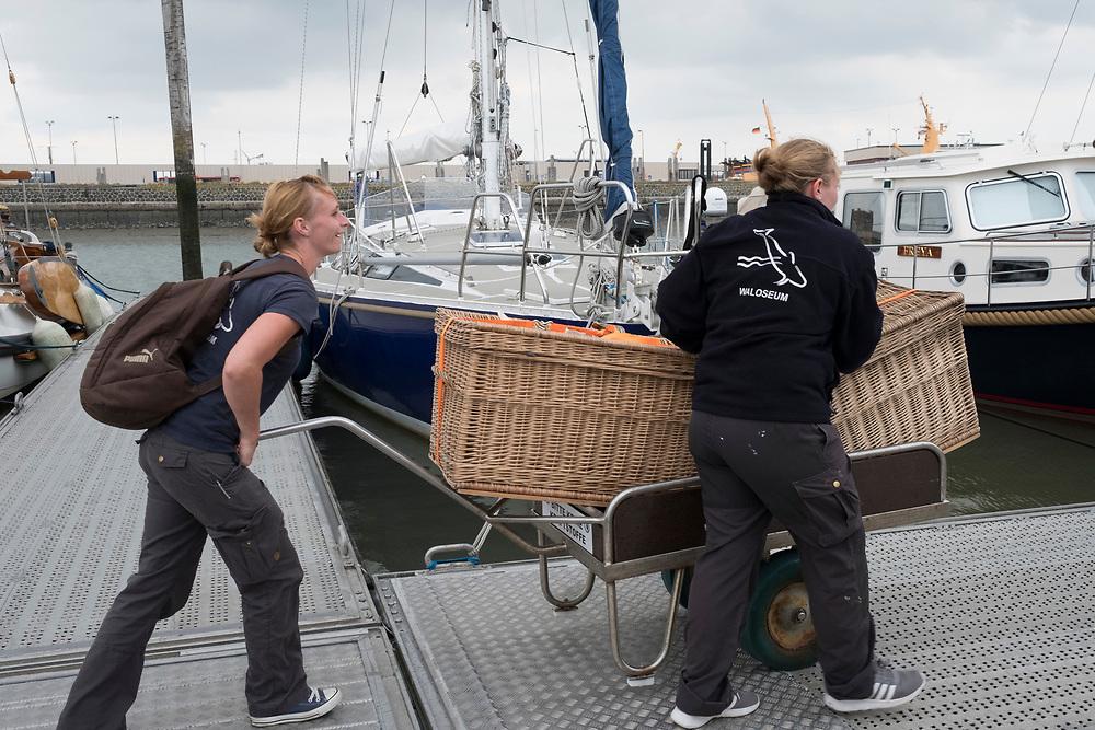 Auswilderung mit der Seehundstation Norddeich in Norden, Germany