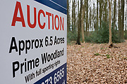 An auctioneer's sign announces an upcoming woodland sale by auction for private land in north Somerset. Surrounded by tall beech trees the sign shows details for the sale including the name of auction holder's name Hollis Morgan and information of the land's 6.5 acre plot of prime woods with sporting (shooting) rights. Dead leaves from the previous autumn mulch down underfoot where Victorian lime mines were once a thriving local industry.