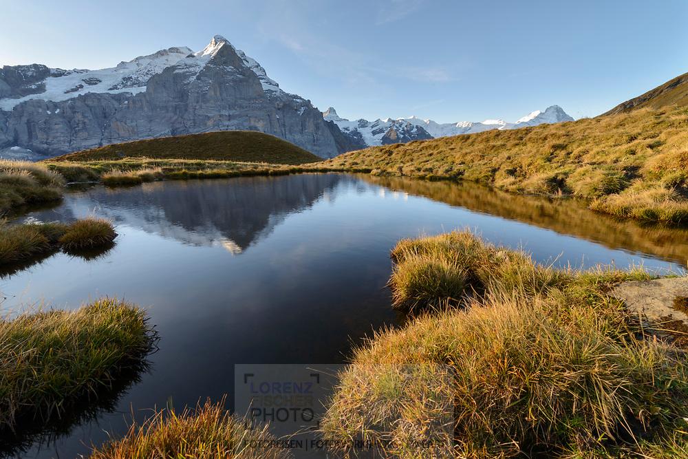 Spiegelung der Berner Hochalpen mit Scheidegg Wetterhorn (3361) Mönch (4107) und Eiger (3970) in einem Bergsee beim Gummi oberhalb der Grossen Scheidegg bei Grindelwald an einem schönen Herbstmorgen im Oktober.