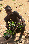 Hadza man eating berries from a bush Photographed near Lake Eyasi, Tanzania, Africa