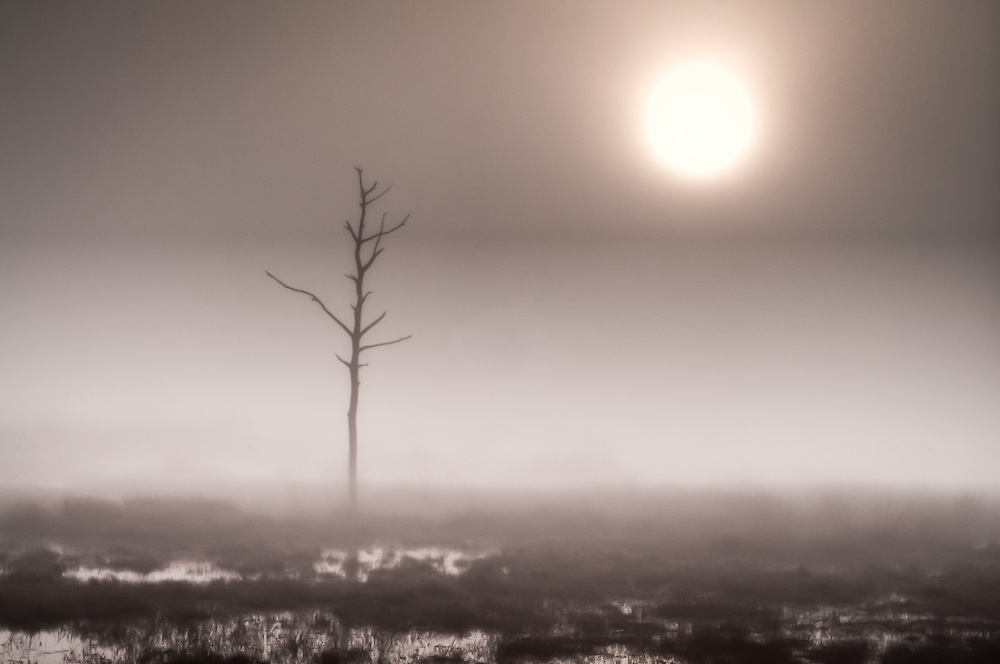 After waiting and then almost giving up due to the fog, the sun burned through enough of it for me to get this shot.