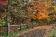 A Walking Path And Fence On A Rainy Day Amid The Brilliant Colors Of Autumn, Sharon Woods, Southwestern Ohio, USA