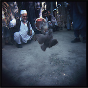 Men play cock fight in Kabul.